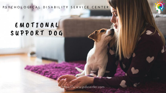 Emotional support dog | Service animal letters